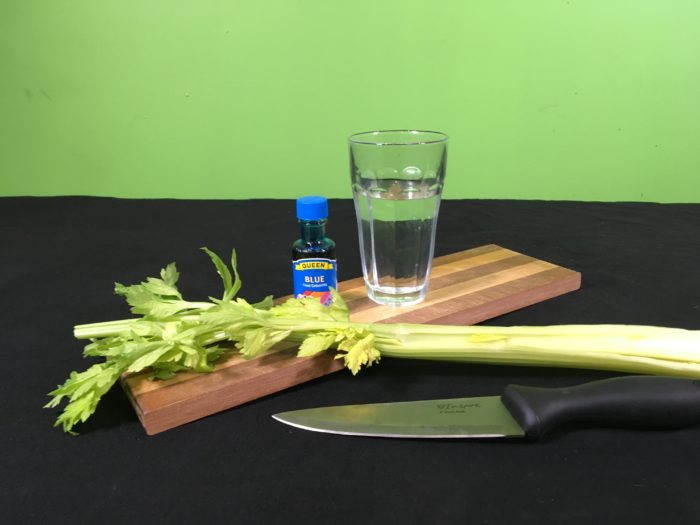 Celery Transpiration Science Experiment - setupmaterials