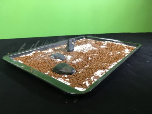 Model Meteorite Strikes Science Experiment - throwing third rock into baking tray(1)