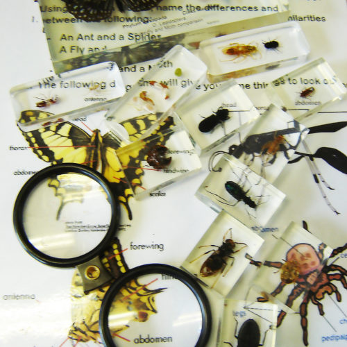 insects in resin