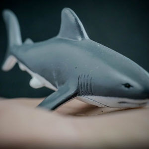 Great white shark replica_3