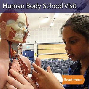 Human Body school science visit tile showing a child looking at a human torso model
