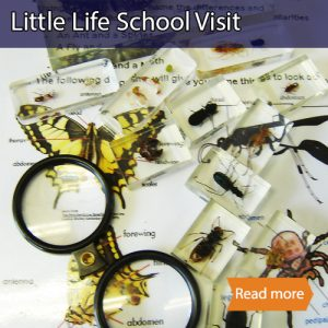 Little Life school science visit tile showing magnifiers and various little creatures embedded in resin