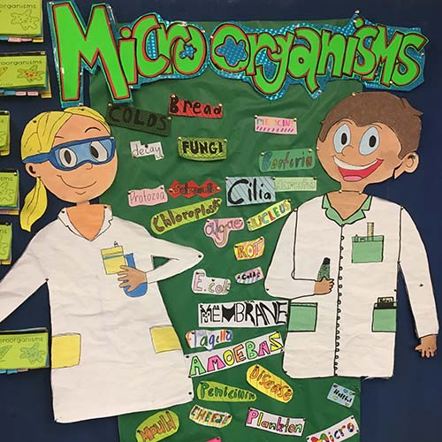 Microbes poster at Mt Keira Demonstration School