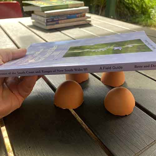 Placing on book onto the eggshell halves