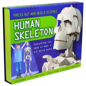 The front of the Press Out And Build Human Skeleton kit. It shows a kid standing next to a 1.2 meter paper skeleton as well as a close-up of the skull and upper body assembly